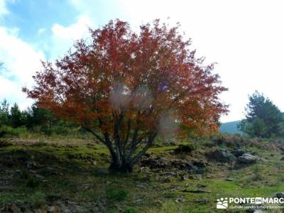 La Dehesa Bonita - Abedular de Somosierra_ rutas por Madrid _ rutas de senderismo